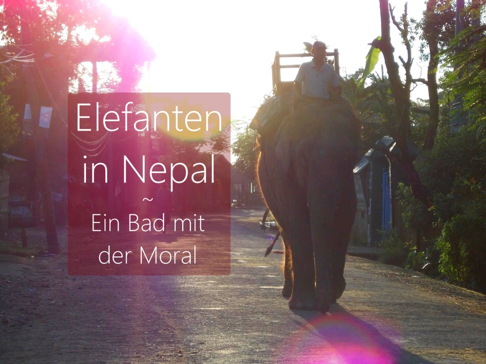 nepal-sauraha-elefant