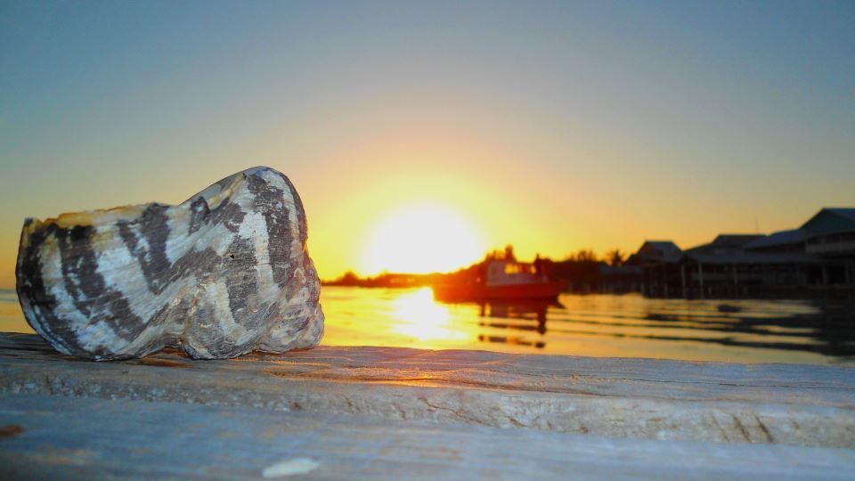 Eine Woche auf Utila - Freediven im Paradies
