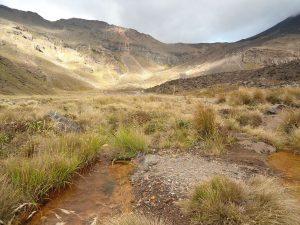 Neuseeland-Tongagiro-Gras-Vulkan