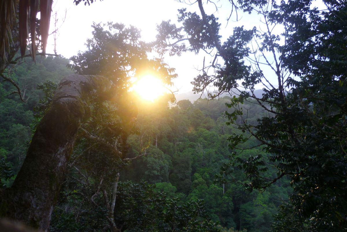 Laos-Gibbon-Experience-Baumhaus-Sonnenuntergang