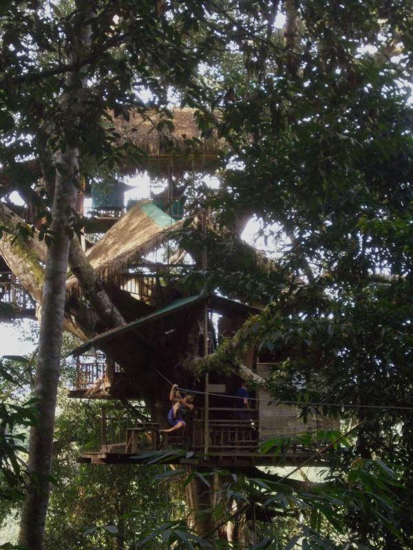 Laos-Gibbon-Experience-Baumhaus