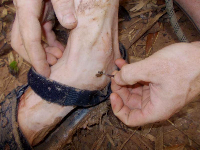 Laos-Gibbon-Experience-Dorf-Blutegel