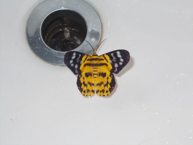 Laos-Gibbon-Experience-Schmetterling