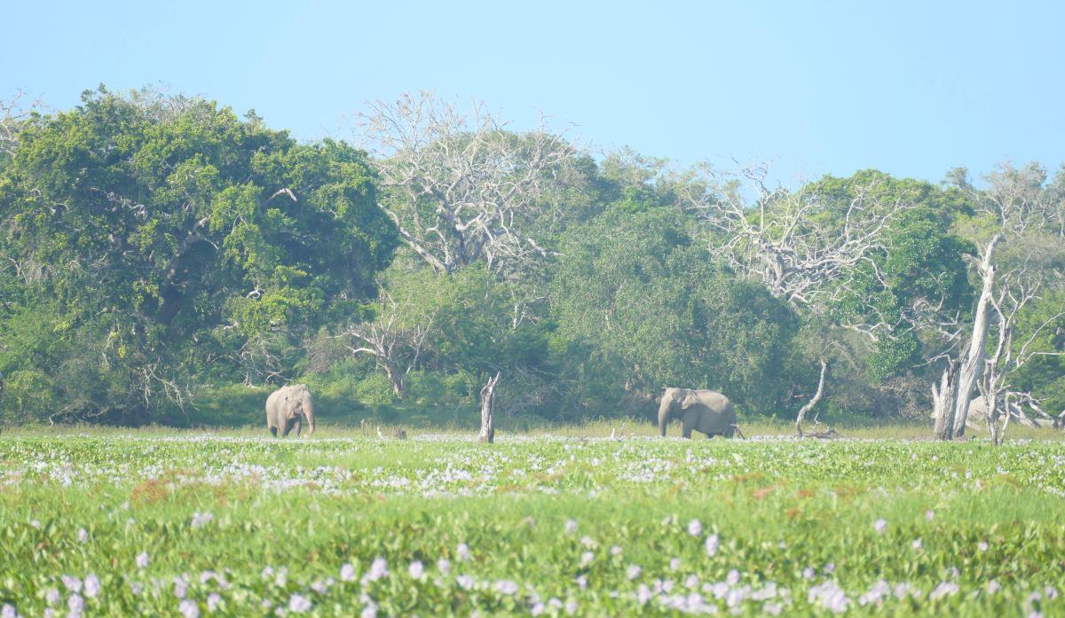 Sri Lanka-Yala-Elefant-1200