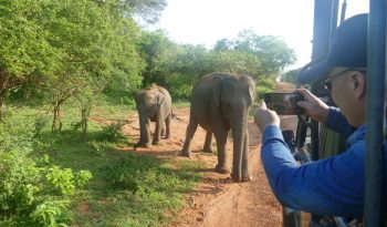 Sri Lanka-Yala-Elefant-mit-Baby